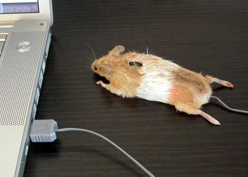 Realmousemouse
